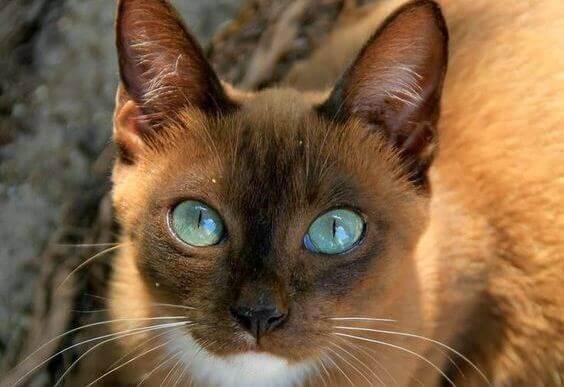 kissa ja muut eläimet ja niiden katse
