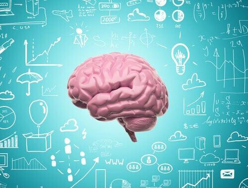 Neuroplastisuuden ansiosta emme koskaan lakkaa oppimista