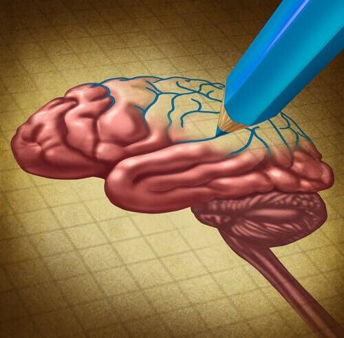 neuroplastisuus