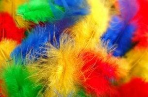 synestesia värikkäät höyhenet