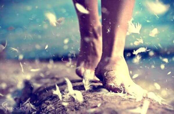 jalat ja höyhenet