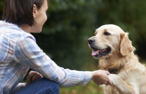 koira ja nainen