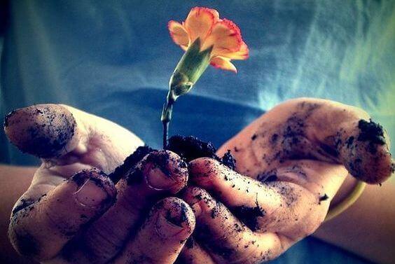 kukka ja multaa kämmenellä