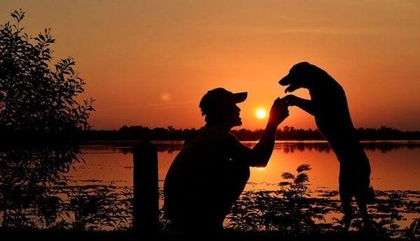 koira ja mies