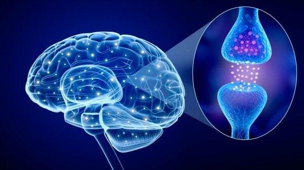 aivojen välittäjäaineet