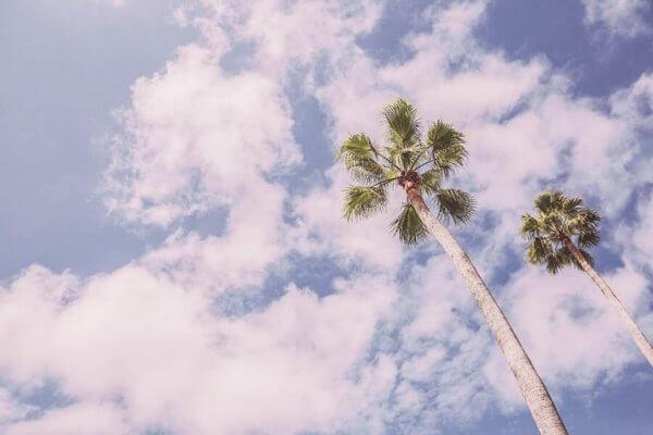 taivas ja palmut