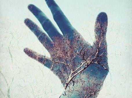 puun kuva kädessä