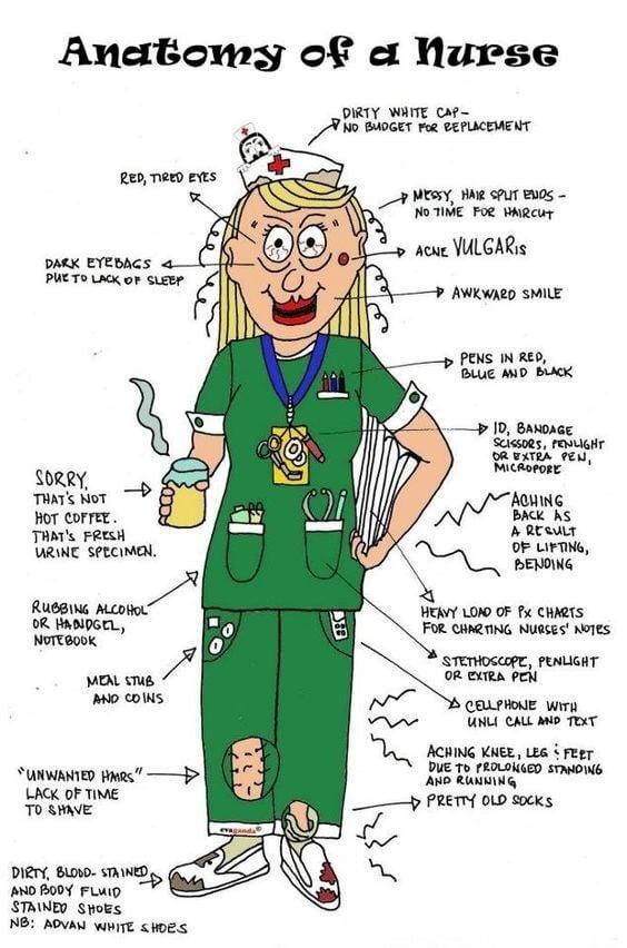 sairaanhoitajan anatomia