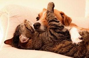kissa luottaa koiraan