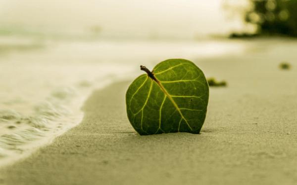 lehti hiekassa