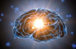 aivojen kognitiivinen varaus