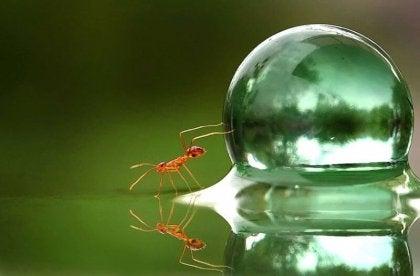 vesipisara ja muurahainen