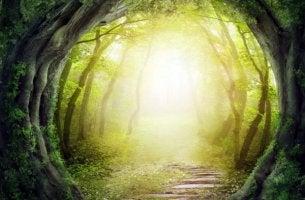 puutunneli metsässä