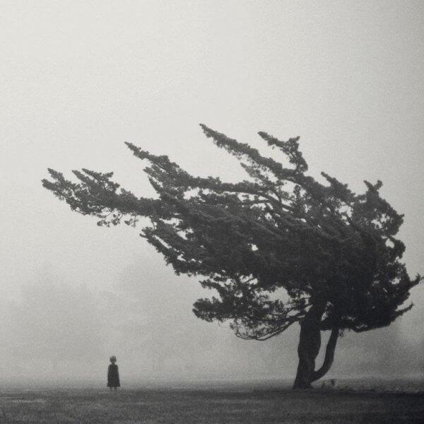 puu ja tyttö