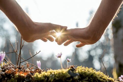kaksi kättä kukan päällä