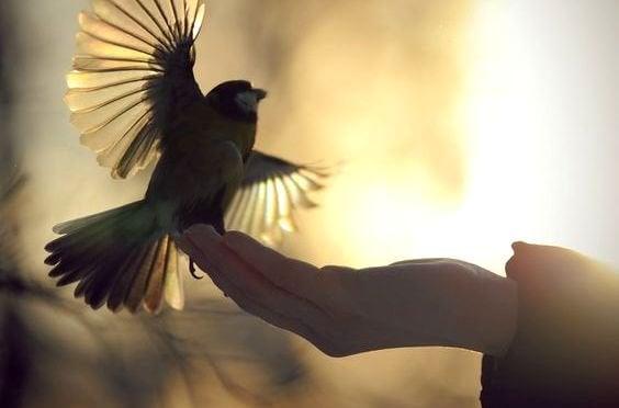 lintu yrittää lentoon kädeltä