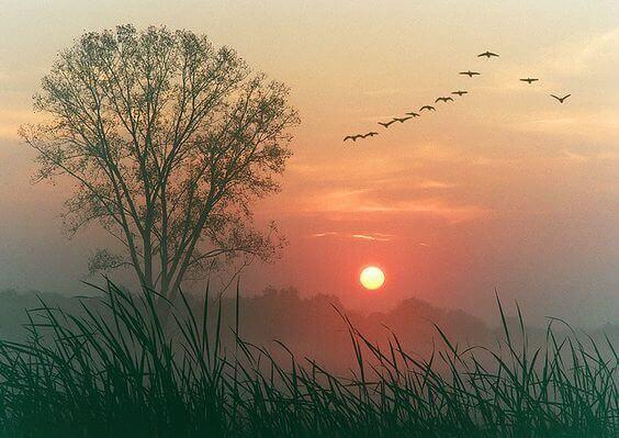 utuinen maisema ja linnut