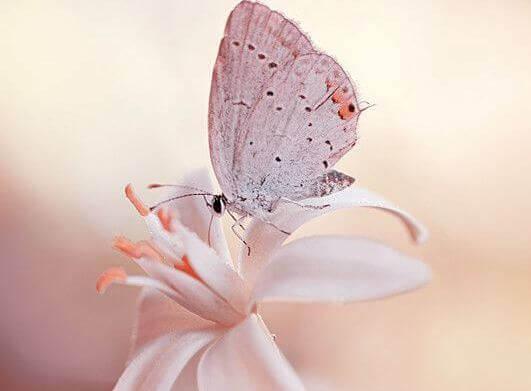 perhonen kukkasen päällä