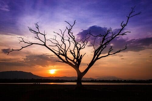 puu auringonlaskussa