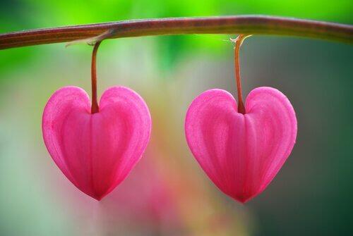 sydämenmuotoiset pikkukukat