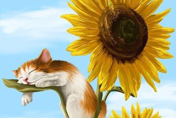 kissa nukkuu auringonkukassa