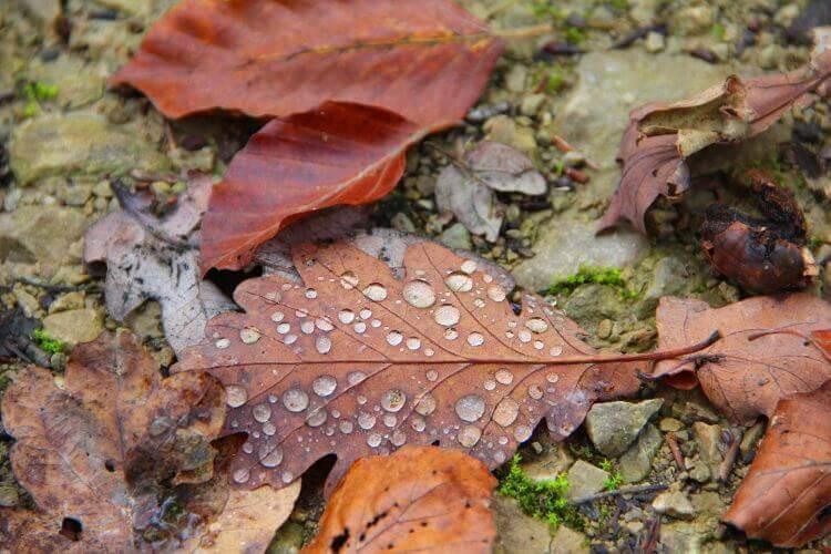 Vesipisaroita pudonneilla lehdillä