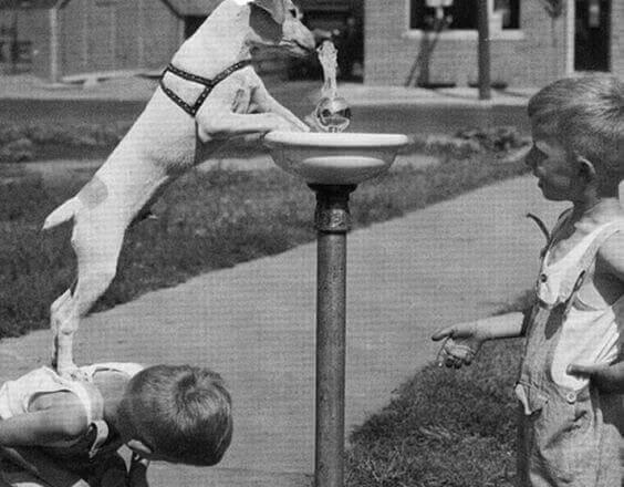 Pojat ja koira