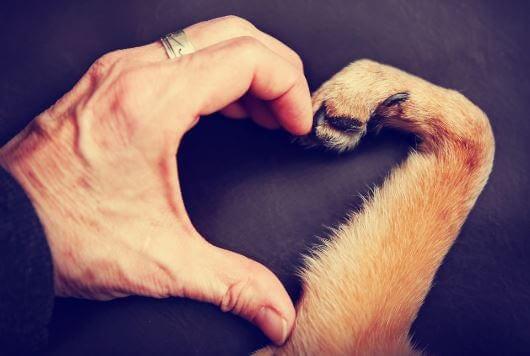 sydän ihmisen kädellä ja koiran tassulla