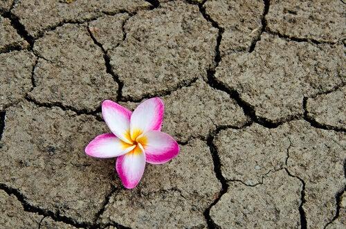 kukka kuivuneessa maassa