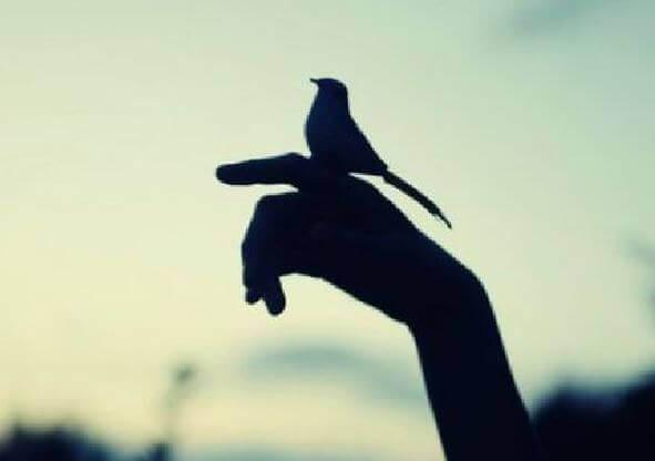 lintu ihmisen kädellä