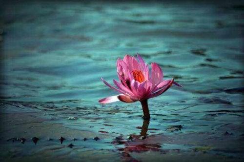 lootuskukka vedessä