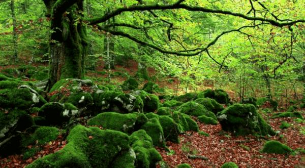 Metsän vihreys