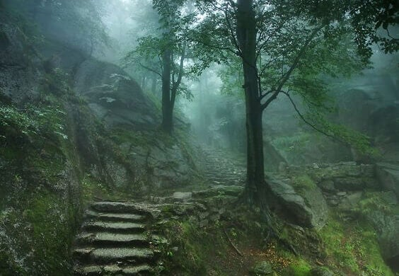 Hämyinen metsä