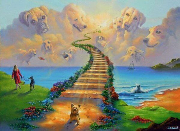 Kuvahaun tulos haulle sateenkaarisillalle koira