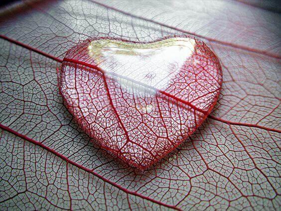 sydän ja hauras puunlehti