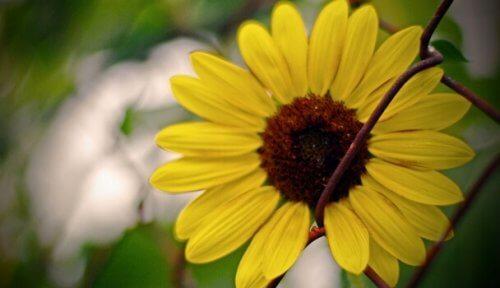kukka kasvaa rautalanka-aidan läpi