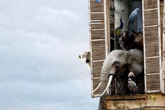 eläimet asuvat kerrostalossa