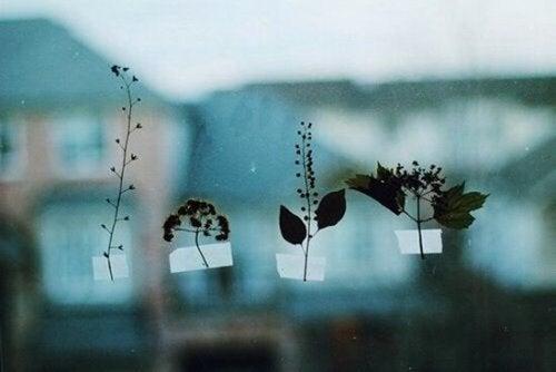 ikkunaan teipatut kasvit