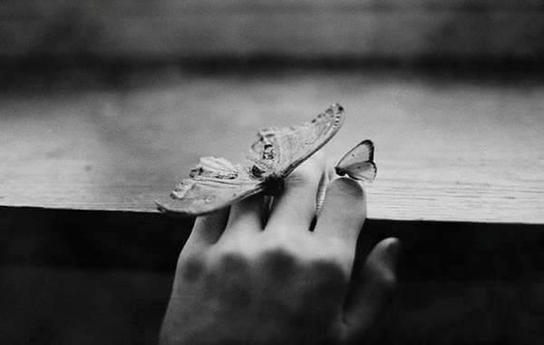 kädessä perhosia