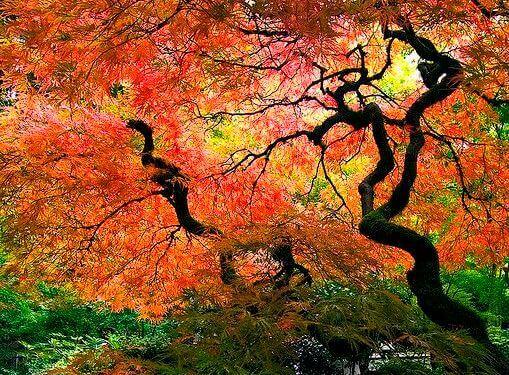 syksyiset puut