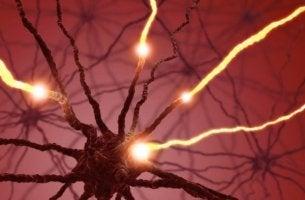 Serotoniini, hermoston välittäjäaine