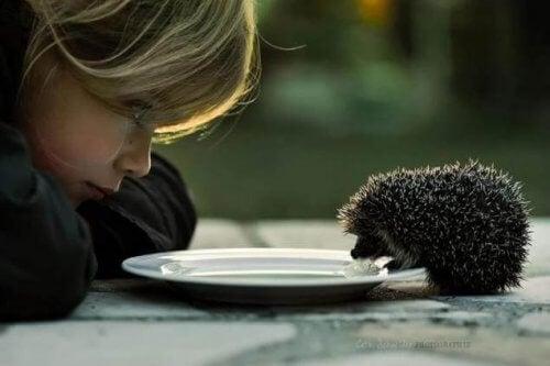 lapsi katsoo kun siili syö