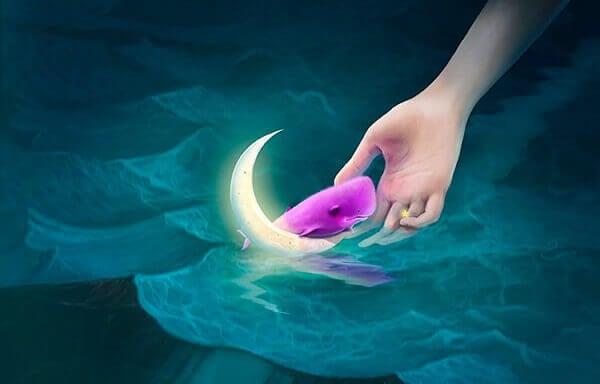 kuu ja vaaleanpunainen valas vedessä