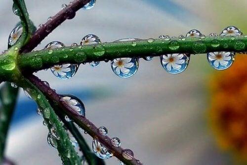 kukkia vesipisaroissa