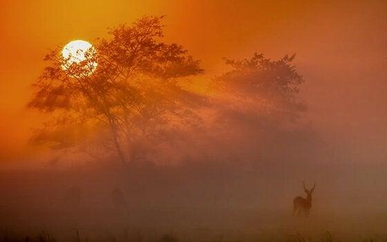 Afrikan auringonlasku