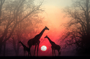 Auringonlasku Afrikassa