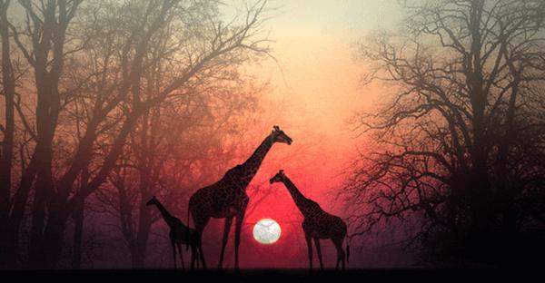 Anna aikaa sielulle: kaunis tarina Afrikasta