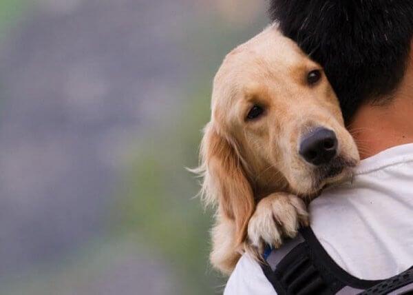 koira ja mies halaavat