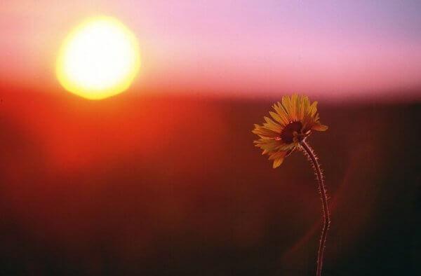 Auringonlasku ja kukka