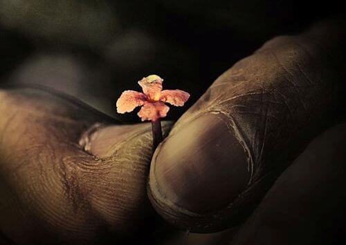 pienen pieni kukka isojen sormien välissä